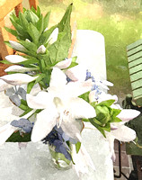 WST04- White Hosta and Blue Hydrangea