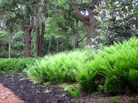 HG3- Heritage Gardens Cedar and Fern Grove