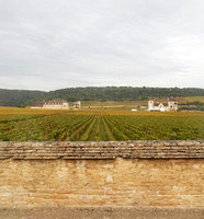 VIN01  Clos de Vougeot Grape Vine Field