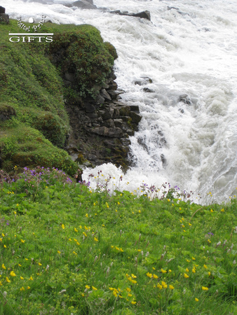 GullfossB- Buttercups At Golden Falls