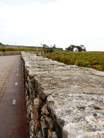 VIN03 Clos de Vougeot Vineyard Wall